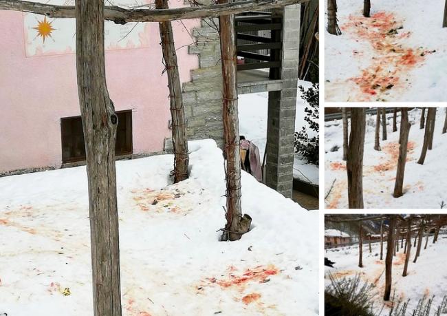 attacco lupo sangue neve viganella mix