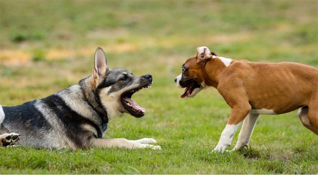 cani liberi gioco